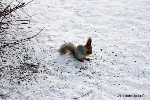 2013.03.18 squirrel